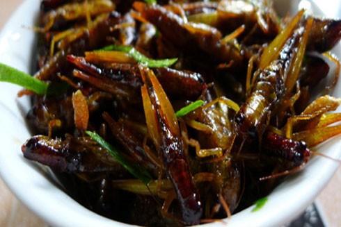Ăn côn trùng, làm sao để không ngộ độc?