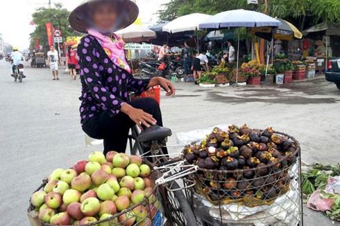 Loại táo đá gắn mác Hà Giang thực chất là táo Trung Quốc