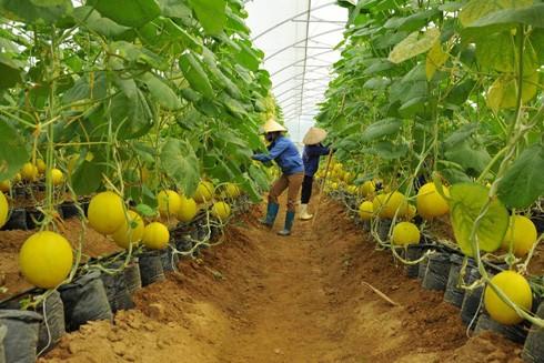 """""""Chìa khóa"""" cho nông nghiệp công nghệ cao"""