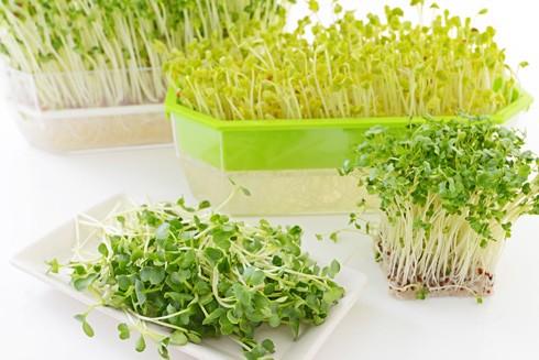 Lợi ích và cả tác hại của rau mầm