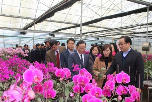 Đoàn công tác thành phố Hà Nội thăm doanh nghiệp trồng lan tại Mộc Châu