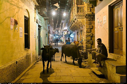 Bò đi hoang trên đường phố Uttar Pradesh