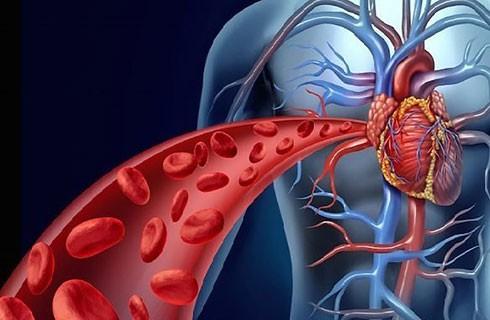 Lưu thông máu tốt là yếu tố quan trọng cho một cơ thể khỏe mạnh