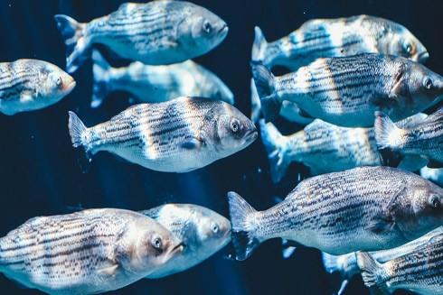 Chất nhầy trên cơ thể cá có thể là chìa khóa mở ra hướng phát triển cho những loại kháng sinh mới