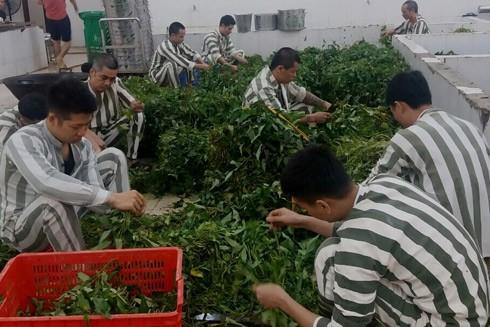 Các phạm nhân ở Trại tạm giam số 2 - CATP Hà Nội chuẩn bị cho bữa ăn tập thể