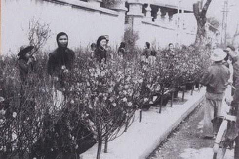 Chợ hoa Tết Hàng Lược