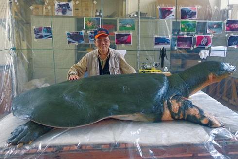 PGS.TS Hà Đình Đức bên tiêu bản rùa hồ Gươm cuối cùng tại Bảo tàng Thiên nhiên Việt Nam