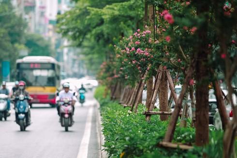 Toàn bộ bê tông dải phân cách nhiều tuyến đường được thay bằng hàng cây xanh cùng nhiều loại hoa đẹp mắt