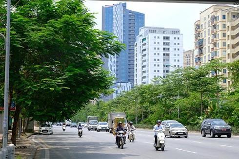 Đường Võ Chí Công được phủ xanh với nhiều tầng cây ở các làn đường - Ảnh: lam thanh
