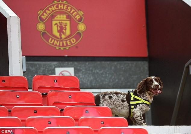Chó nghiệp vụ được huy động để tìm kiếm bom mìn trên khán đài sân Old Trafford