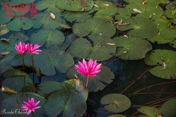 Suối Yến đẹp mê hồn trong nắng thu