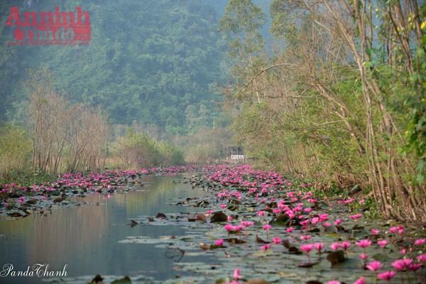 Nằm cách Hà Nội gần 60km, suối Yến còn được biết đến với tên gọi khác là Suối Vĩ – một con suối nằm trong khu di tích thắng cảnh Chùa Hương, thuộc xã Hương Sơn, huyện Mỹ Đức, Hà Nội.