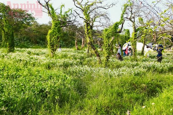 Có một thảo nguyên đẹp mê hồn giữa lòng Hà Nội ảnh 6