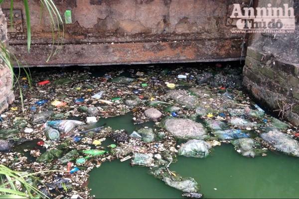 Hồ Văn Quán: Tảo nổi váng dày đặc, bốc mùi ảnh 6
