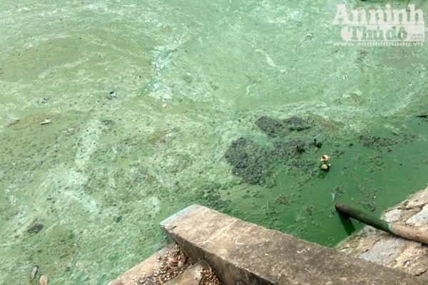 Hồ Văn Quán: Tảo nổi váng dày đặc, bốc mùi ảnh 2