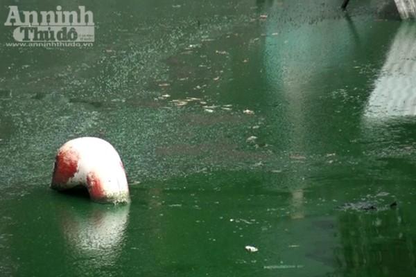 Hồ Văn Quán: Tảo nổi váng dày đặc, bốc mùi ảnh 7