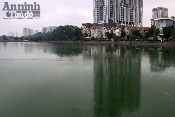 Hồ Văn Quán rộng hơn 2.000 m2, đây được coi là lá phổi xanh của quận Hà Đông, điều hòa không khí cho hàng loạt khu đô thị xung quanh.