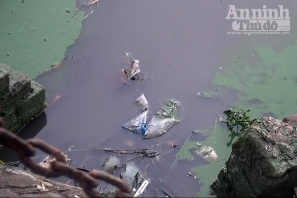Hồ Văn Quán: Tảo nổi váng dày đặc, bốc mùi ảnh 8