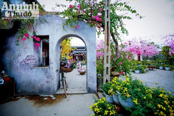 Góc tường loang lổ, gốc cây hoa giấy bên hiên nhà... cảnh sắc khiến khách chụp ảnh cảm thấy như được đặt chân đến phố cổ Hội An.