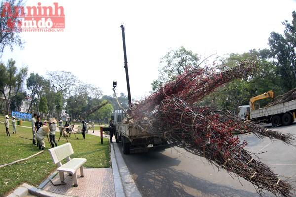 Được biết, trong đợt 1 mới chỉ vận chuyển được 45 cây. Số còn lại sẽ được chuyển tới Việt Nam vào ngày 6-3.