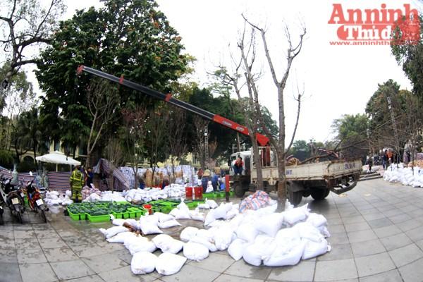 Hà Nội sẵn sàng cho khai mạc triển lãm hoa Anh đào