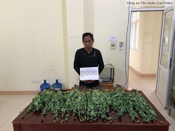 Đối tượng Tráng A Lầu trồng cây thuốc phiện bị bắt giữ