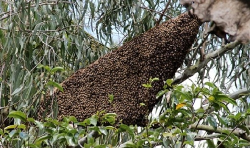 Trong lúc phát cây, cả nhóm bị đàn ong tấn công