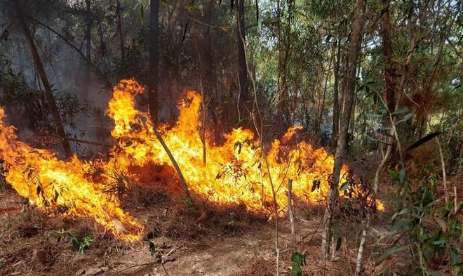 Một phụ nữ bất cẩn đốt rác khiến hơn nghìn người phải dập đám cháy rừng