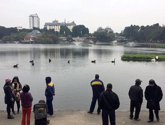 Cắt cử người túc trực 24/24h tại hồ Thiền Quang để bảo vệ đàn thiên nga ảnh 1