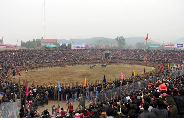 Lễ hội chọi trâu Hải Lựu cổ xưa bậc nhất Việt Nam