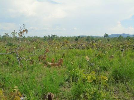 Hiện trường vụ phá hơn 18 ha rừng (trong đó có hơn 9 ha Thương chủ mưu