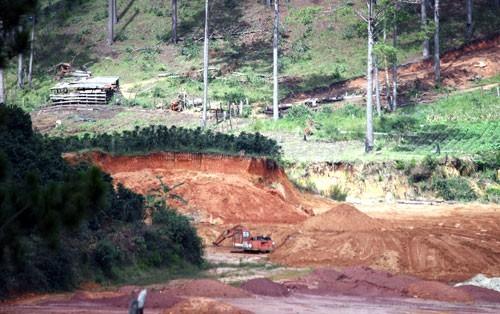 Nhiều doanh nghiệp cho xe ủi đất, cưa cây thông trái phép, phá vỡ môi trường TP Đà Lạt