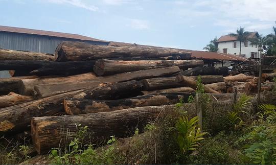 """Xưởng gỗ lậu của trùm Phượng """"râu"""" ở huyện Cư Jút"""