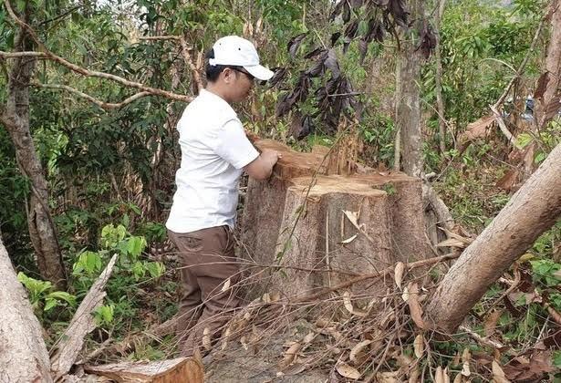 Hình ảnh rừng ở biên giới Đức Cơ (Gia Lai) bị phá mới được phát hiện.