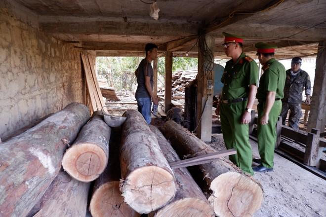 Tổng số gỗ lậu tại xưởng gỗ là hơn 8,3 m3