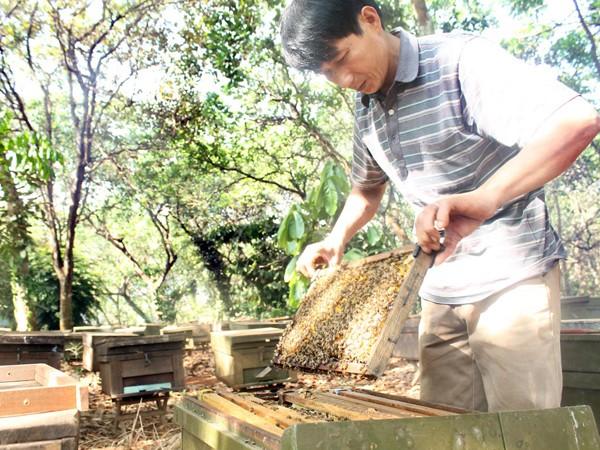 Xuất khẩu 45.000 tấn mật ong cần 225.000 giấy phép ảnh 2
