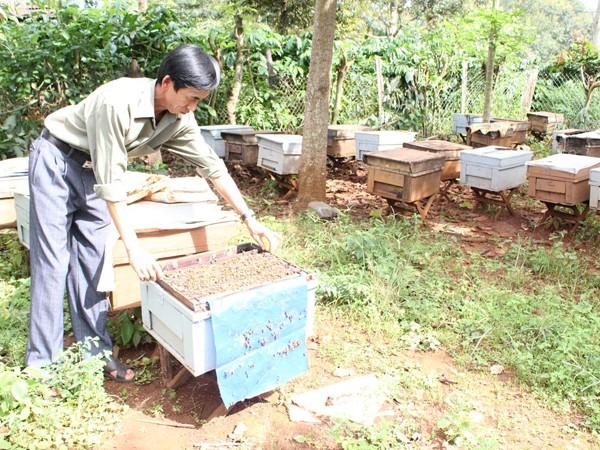 Xuất khẩu 45.000 tấn mật ong cần 225.000 giấy phép ảnh 1