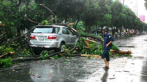 """TP.HCM """"hỗn loạn"""" bởi hàng loạt cây xanh bật gốc, đổ trong chiều mưa ảnh 4"""