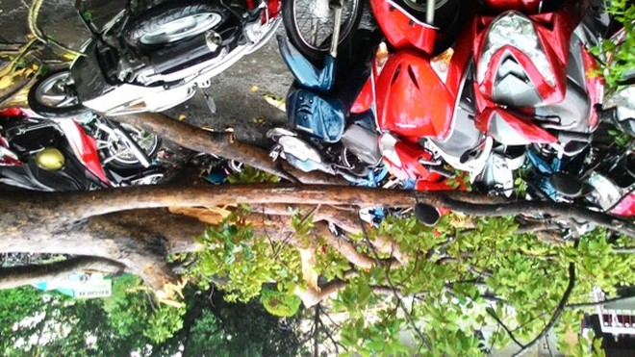 """TP.HCM """"hỗn loạn"""" bởi hàng loạt cây xanh bật gốc, đổ trong chiều mưa ảnh 3"""