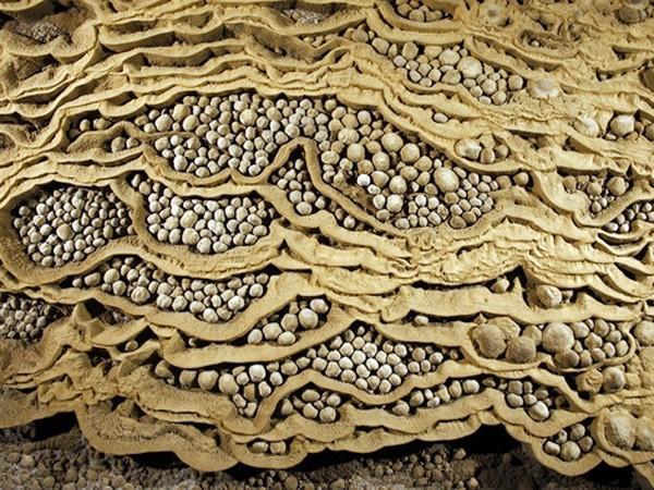 """Tinh thể canxi đã bao bọc những hạt cát nhỏ để tạo thành những """"viên ngọc trai"""" quý hiếm. """"Bộ sưu tập ngọc trai"""" vô giá này nằm gần Vườn địa đàng trong hang Sơn Đoòng liệu có còn khi khách du lịch ùn ùn kéo đến?"""
