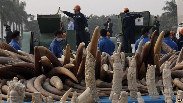 Quan chức Trung Quốc lợi dụng công vụ mua hàng tấn ngà voi trái phép ảnh 2