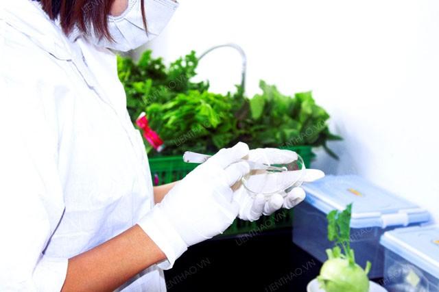 Sản phẩm rau sạch được kiểm tra trước khi đưa ra thị trường