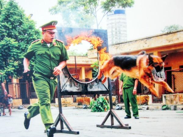 Huấn luyện chó nghiệp vụ nhảy qua vòng lửa