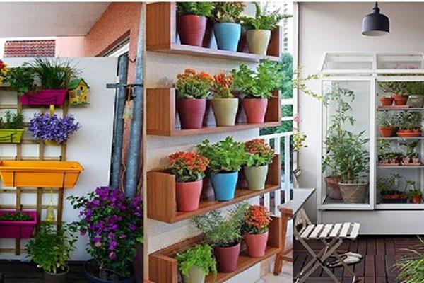 Kê các chậu cây nhỏ xinh trên tường giúp tiết kiệm diện tích (nguồn: pixgateway)