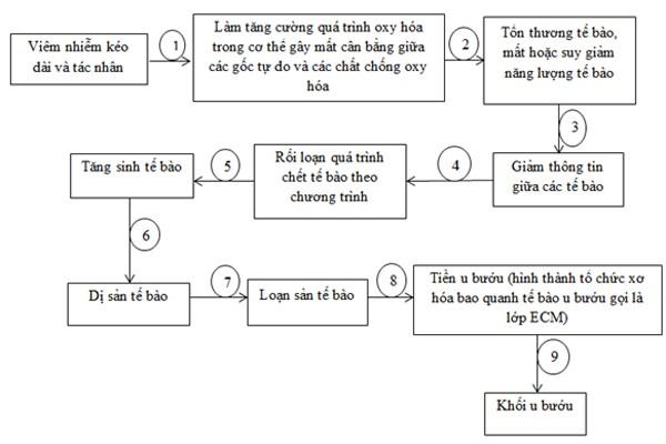 9 bước hình thành