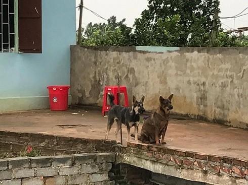 Con chó màu đen bị 2 đối tượng bắt trộm được giao trả cho chủ nhà