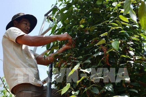 Tăng năng suất, chất lượng nông sản Việt từ mô hình liên kết trực tiếp ảnh 1