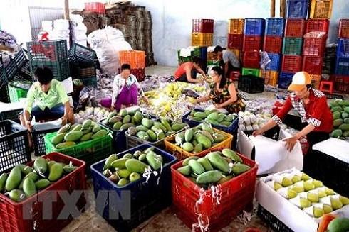Tăng năng suất, chất lượng nông sản Việt từ mô hình liên kết trực tiếp ảnh 2
