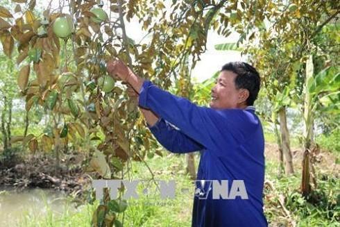 Tăng năng suất, chất lượng nông sản Việt từ mô hình liên kết trực tiếp ảnh 3