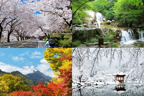 """Những bí kíp để có chuyến du lịch Hàn Quốc """"hoàn hảo"""" ảnh 1"""